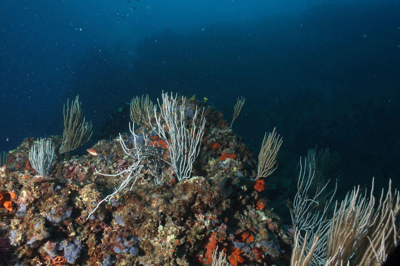 Biocenosis marinas: comunidades planctónicas y bentónicas