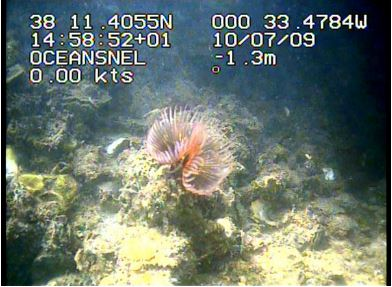 The use of georeferenced underwater TV devices for the study of the exotic invasive species Branchiomma luctuosum (Polychaeta, Sabellidae) in ports from Eastern Iberian coast (Western Mediterranean Sea, Spain).